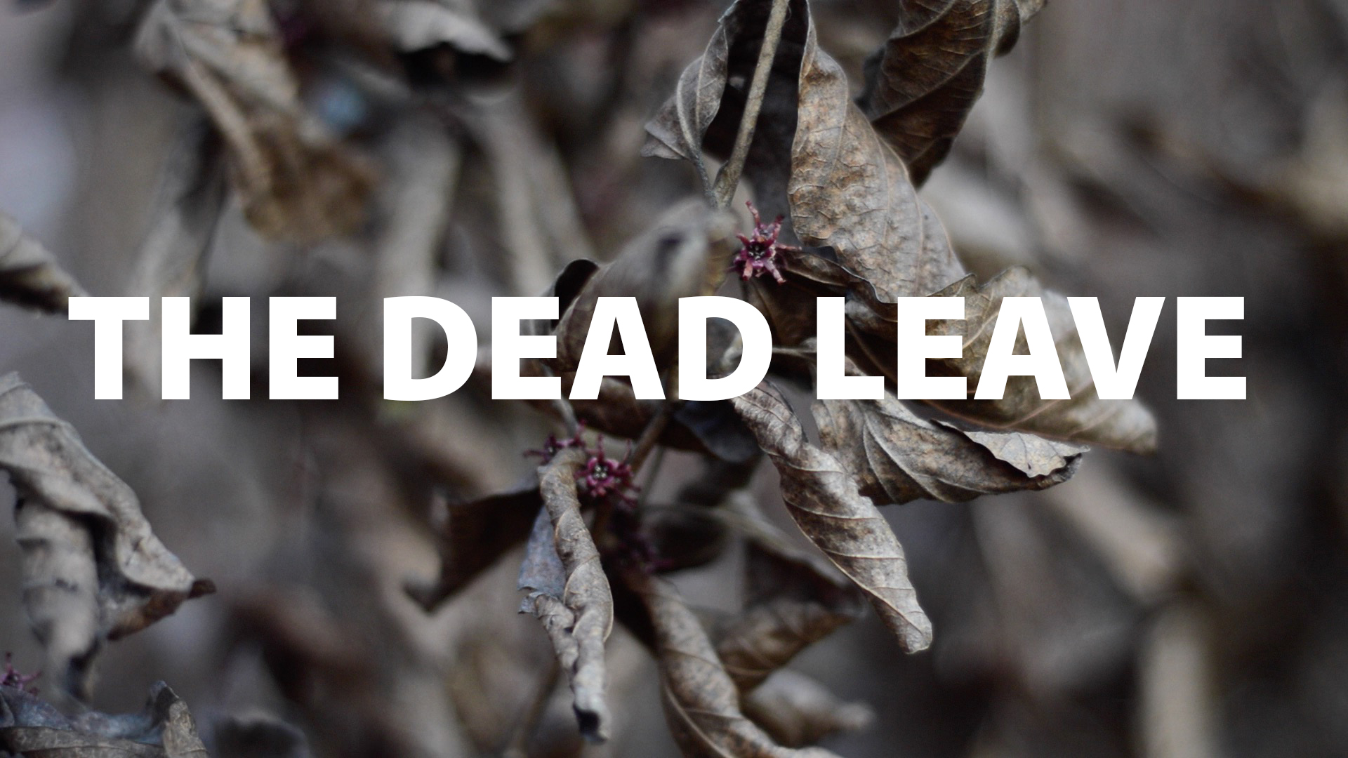 The Dead Leave