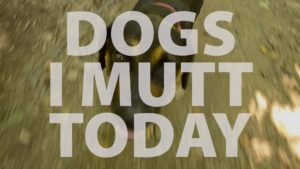 Dogs I Mutt Today