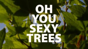 Oh You Sexy Trees