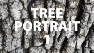 Tree Portrait 1