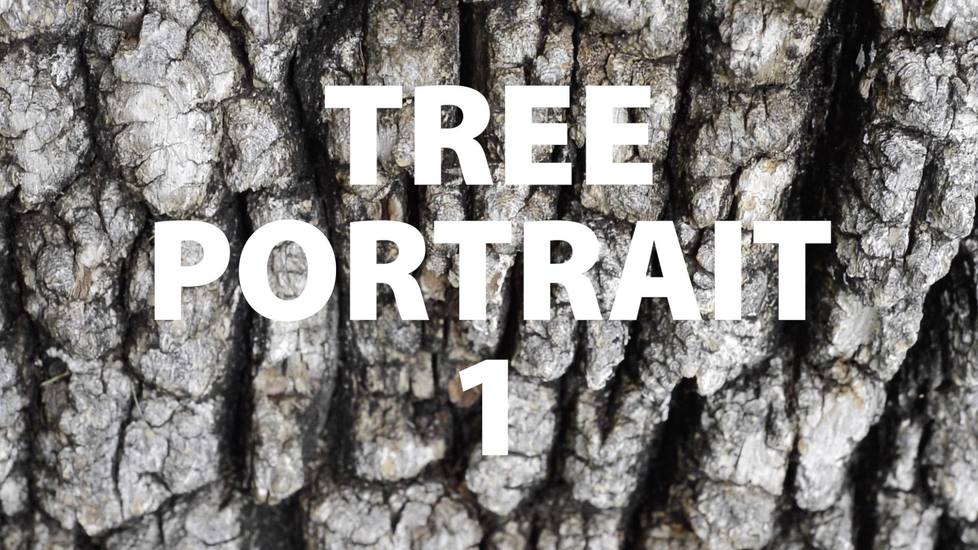 Tree Portrait 1