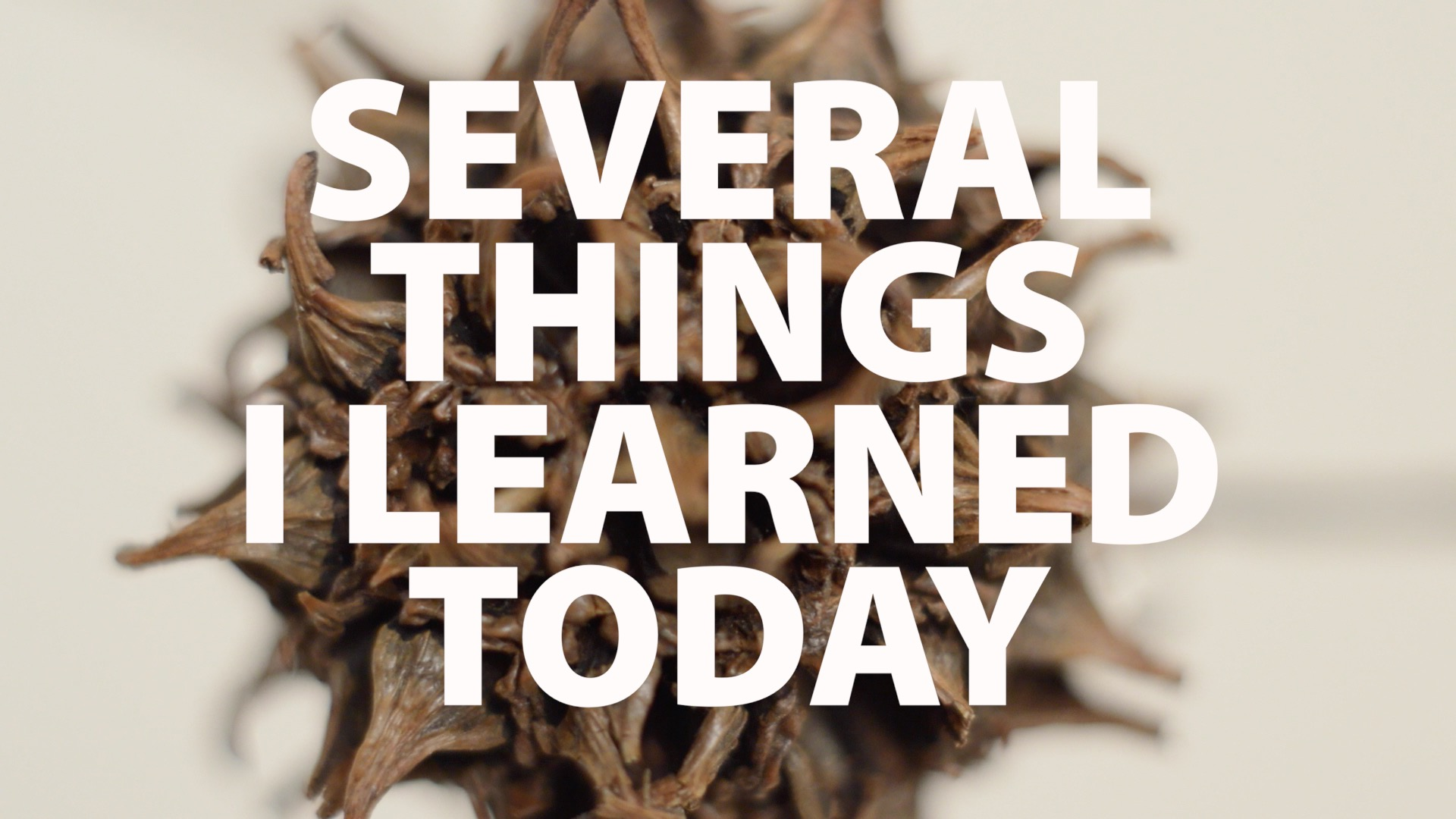 Several Things I Learned Today